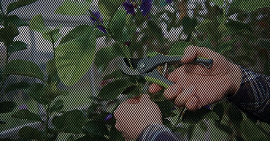 Outils de coupe et de taille pour le jardin